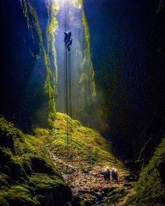 """Dropping down into the """"Lost World"""" at Waitomo Caves, New Zealand is an otherworldly experience filled with action, adventure and stunning glow worm scenery ❤ Who would you take with you? The Lost World, New Zealand, Places To Go, Nature Photography, Scenery, Adventure, Painting, Beautiful, Wanderlust Travel"""