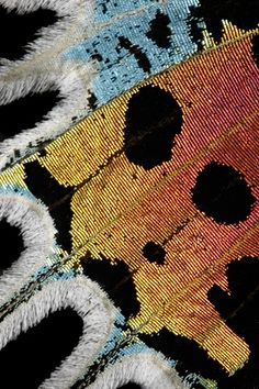 Sunset Moth Wing Profile. PBase. 2005. Sunset Moth Wing Profile by Bangkok Photographer. [online] Available at: http://www.pbase.com/colind/image/44207719