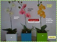 Resultado de imagen para MACETAS PARA BONSAI Y ORQUIDEAS articulos.mercadolibre.com