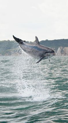 A study shows that dolphins and whales squeaks are actually noises of delight. :D
