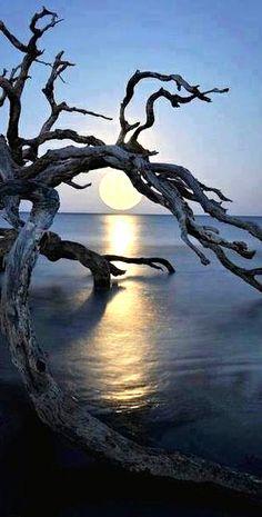 Grillige van hout B. Grillig-strak Het grillige van het hout steekt af tegen de strakke horizon en de perfect ronde zon.