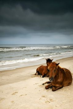 Horses on the beach. I wAnt to go to North Carolina one day to see the wild horses on the beach. All The Pretty Horses, Beautiful Horses, Animals Beautiful, Beautiful Sky, Beautiful Babies, Animals And Pets, Cute Animals, Wild Animals, Mundo Animal