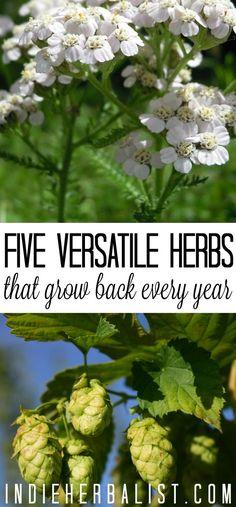 5 Versatile, Perenni