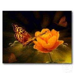 Spring Butterfly on Rose Postcard