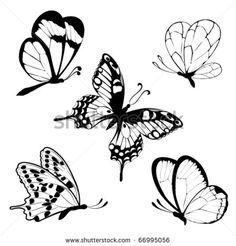 Set  Black White Butterflies Of A Tattoo Stock Vector Illustration 66995056 : Shutterstock