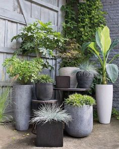 7 tips for noise protection in the garden: So the outdoor area becomes a real oasis of peace - Garten - Pflanzen Outdoor Pots, Outdoor Gardens, Outdoor Flower Planters, Black Planters, Tall Planters, Back Gardens, Small Gardens, Garden Planters, Concrete Planters