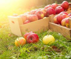 240 Organic Farming Ideas Organic Farming Organic Growth Hormone