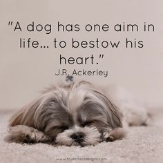 """""""A dog has one aim in life. to bestow his heart"""" J. Boxer Dog Quotes, Boxer Dogs, Pet Quotes, Qoutes, I Love Dogs, Cute Dogs, Aim In Life, Basic Dog Training, Dog Halloween Costumes"""