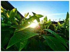 Svegliarsi con il sole.... Foto KatyB