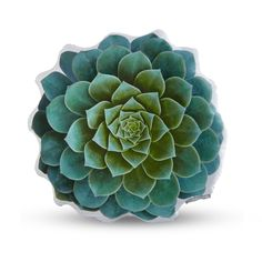 Handmade Sateen Succulent Cushion - Blue Echeveria - Dot & Bo