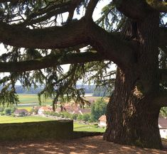 chateau de luins bourru cave ouverte Cave, Plants, Lake Geneva, Caves, Plant, Planets