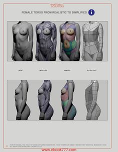 FEMALE TORSO FROM REALISTIC TO SIMPLIFIED