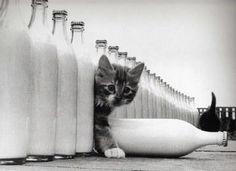 chaton bouteille - Recherche Google