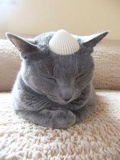 sea cat.