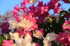 Zázrak proti celulitidě roste nejspíš i na vaší zahrádce   Naše zahrada Flowers, Plants, Gardening, Lawn And Garden, Plant, Royal Icing Flowers, Flower, Florals, Floral
