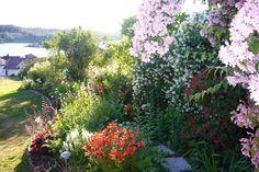 Late Spring Flowering