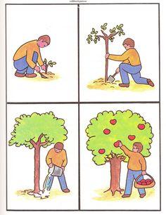 (2014-07) 4 billeder, æbletræ