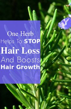 One Herb Helps To Stop Hair Loss And Boosts Hair Growth, Try This