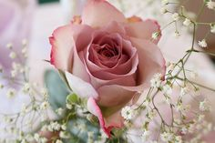 a single rose is so sweet.  this pink one is pretty!