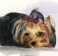 Cimmaron Dog Art creates art work, t shirts, and decals for all breeds of dogs including corgis,irish setters and vizslas. Yorkshire, Yorshire Terrier, All Breeds Of Dogs, Irish Setter, Dogs Golden Retriever, Yorkies, Dog Art, My Sunshine, Watercolor Art