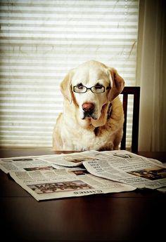 Tv time | Funny animals | Pinterest | My boyfriend, Boyfriends and ...