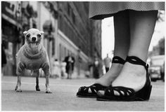 'Dog' New York City, 1946 | Photograph by Elliott Erwitt dog is pretty cute...but those shoes! want them.