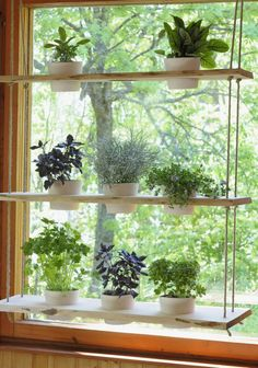hanging plant holder. Perfect for kitchen window (herbs/succulents)