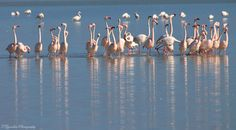 Wildlife in Greece Kos, Flamingo, Greece, Salt, Wildlife, Birds, Island, Nature, Photography