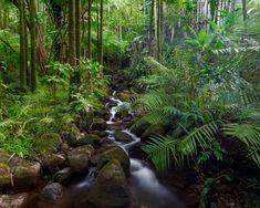 florestas pluviais - Pesquisa Google
