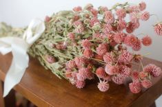 Dried pink gomphrena