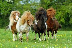 Attack of the ponys! All The Pretty Horses, Beautiful Horses, Animals Beautiful, Cute Baby Animals, Farm Animals, Miniature Ponies, Tiny Horses, Faster Horses, Mini Pony