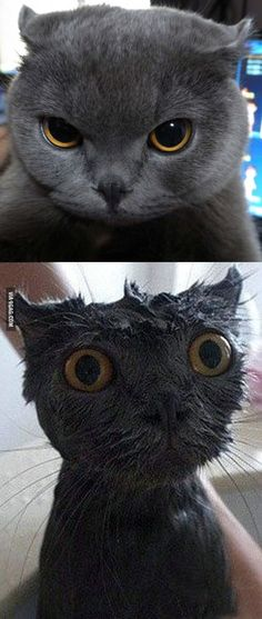The Funniest Wet Cat Pictures Ever You Will WET Yourself - 26 funniest wet cats pictures