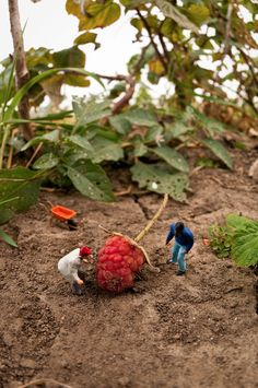 Photo Adventures in a Miniature World by Kurt Moses