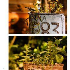 多肉植物の寄せ植え〜♪ #絶賛販売中 #多肉植物#多肉植物寄せ植え #神戸#灘#王子公園#ソエル#sowelu