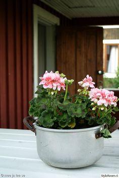 vanha,kattila,pelargonia,siirtolapuutarhamökki Porches, Plants, Front Porches, Porch, Verandas, Plant, Porticos, Planets, Terraces