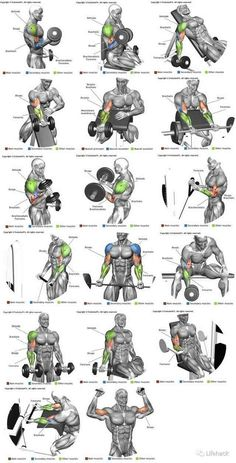 53 Ideas for fitness workouts arms biceps muscle Fitness Workouts, Fitness Tips, Fitness Motivation, Health Fitness, Women's Health, Fitness Goals, Body Workouts, Wellness Fitness, Muscle Fitness