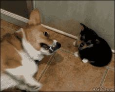 The butt sniff gone terribly wrong. | 33 Animal GIFs That Are Guaranteed To Make You Laugh