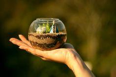 Terrários e minijardins: paisagens naturais que cabem na palma da mão