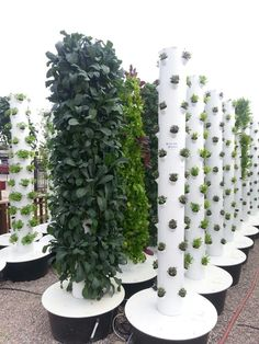 Hydroponic Gardening Ideas Vertical garden with hydroponics in Summerland Hydroponic Farming, Vertical Hydroponics, Plants, Urban Garden, Tower Garden, Vertical Garden, Vegetable Stand, Easy Garden, Vertical Vegetable Garden