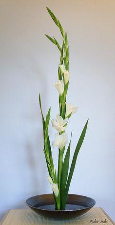 gladiolos 1