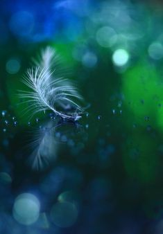 Beautiful feather by YaYa Gonohe Green Colors, Blue Green, Bokeh Photography, Feather Photography, Fotografia Macro, Jolie Photo, My Favorite Color, Beautiful World, Shades Of Blue