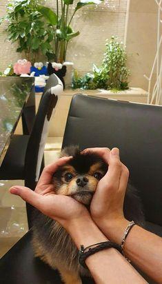 Foto Bts, Bts Photo, V Bts Cute, I Love Bts, V Taehyung, Bts Jungkook, Bts Video, Foto E Video, Bts Dogs