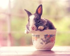Photographer Ashraful Arefin captures the adorable first weeks of a baby bunny's life. #bunny #cute