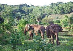 Depois de trabalhar por décadas em um circo, estas duas elefantes finalmente irão encontrar a liberdade em um Santuário para Elefantes localizado na Chapada dos Guimarães, no Mato Grosso. Para isso, Maia, de 44 anos, e Guida, de 42, precisaram encarar uma jornada de 1.600 quilômetros que terminou na última terça-feira, 11. A história das duas elefantes tem vários enigmas. Até o momento, o que se sabe é que elas nasceram em liberdade e foram capturadas ainda filhotes na Tailândia. Desde…