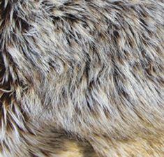 KIT: Coyote Kind Fur - fake fur Environmental Education, Fake Fur, Custom Boxes, Social Studies, Kit, People, Painting, Painting Art, Paintings