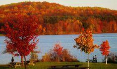 Autumn colorful foliage over lake