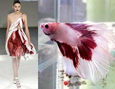 FISH/FOWL INSPIRED FASHION