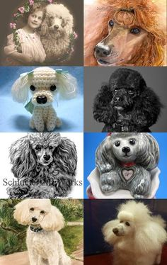Poodle  --Pinned with TreasuryPin.com