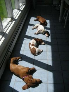 .when was the last time you gave yourself permission to sit in a sun spot?