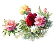 Peonies series I  Original Watercolor Archival Print  by TCChiu, $20.00